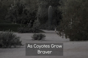 Click for a story about a woman who had to hide in a golf course bathroom to avoid a group of coyotes.